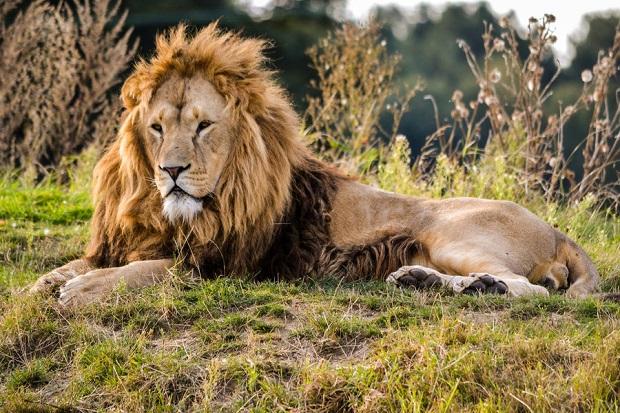 Jednou z promìn ducha je lev